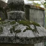 По дороге. Одинокий облетевший лепесток сакуры на старом фонаре
