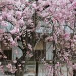 japan_arashiyama_2014_098