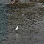 Птичка мокнет в реке