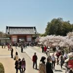 Ворота и сакуровый сад