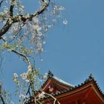 japan_hanami_2014_75