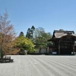 Слева - сакура сомэйёсино - одна из самых первых, отцвела полностью