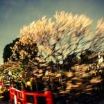 japan_kameido_tenjin_05