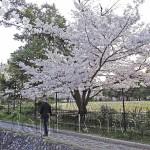 japan_sakura_osaka_06