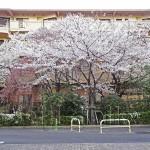 japan_sakura_osaka_18