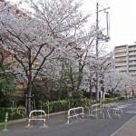 japan_sakura_osaka_19