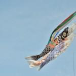 Коинобори - типа флагов в форме карпов-кои. Символ праздника