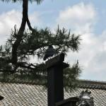 Ворона на стойке ворот внимательно следила за мной. Больше там не было ни души. Ни одной живой души