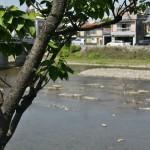 Берег Камо-гавы. Именно тут когда-то было Рокудзё-Гавара