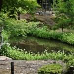 Вид с мостика-перехода на сад