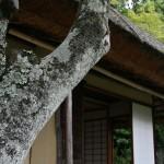 Фрагмент Сэйрэнтэя, замаскированный лишайчатым деревом