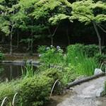 Самый дальний угол сада