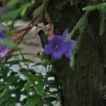 japan_summer_flowers_08