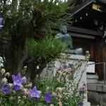 japan_summer_flowers_09
