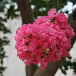 japan_summer_flowers_45