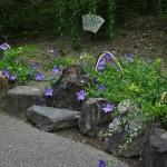 А в саду цветут колокольчики