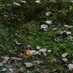 Слива-умэ упала с дерева