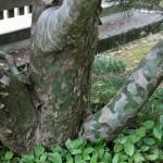 Дерево в камуфляже