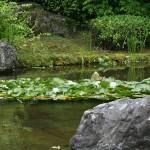 А водяные лилии цветут вовсю
