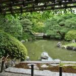 Беседка с глициниями около пруда в саду Муромати. Глицинии, правда, давно отцвели
