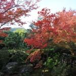 Осенний красный