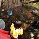 Но это не первая такая саламандра в местном аквариуме, хотя и самая крупная. Вот тут детишки любуются жителями соседнего водоема. Детей в местном аквариуме вообще бешеное количество, особенно в каникулы и на выходных