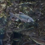 В отдельном аквариуме обитают рыбы Камо-гавы, все виды, включая эндемики. Правда, в этом аквариуме очень сложно снимать: стекло безбожно бликует и отражает. Но рыбы всякой много