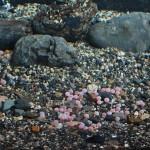 А это икра этой самой форели. В отдельном аквариуме ждут вылупления молоди. Будут выращивать