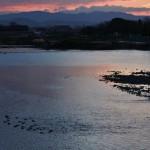 Посмотреть восход прилетели утки