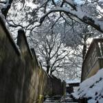 По лестницам ходить еще труднее. Но мы идем в храм Хорин-дзи - один из двух храмов Киото, где есть зодиакальное животное этого года